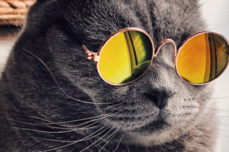 top agent and cool cat