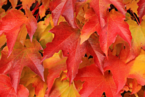 Sell your home in autumn